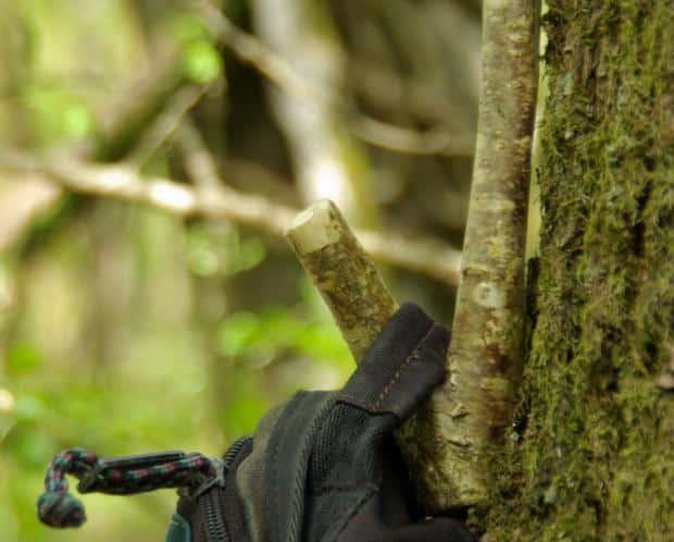 treehook5