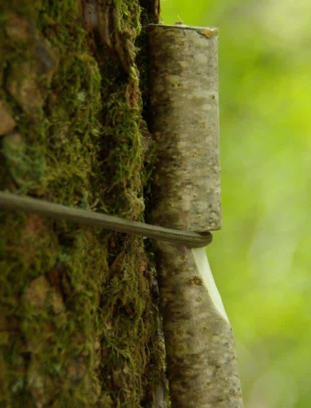 treehook7