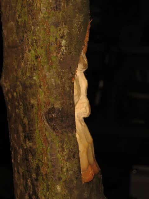 woodspirittutorial031